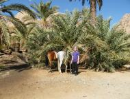 Horse tour Canyon / Oasis