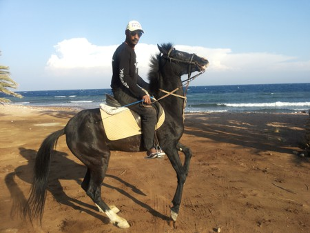 Contact Horse Riding Dahab Egypt