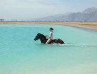 Pferdetour Die Lagune Dahab Sinai